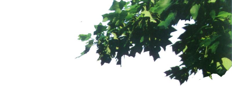 室内装修 装修设计 室内装潢设计贴图 素材 室内装饰 贴图 室外植物