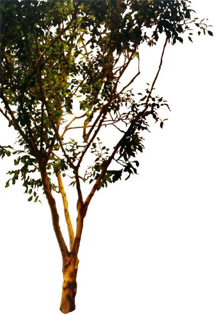 室内 室内装饰素材 园林景观设计 近景树贴图  室内设计室内装修装修