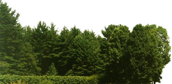 壁纸 成片种植 风景 植物 种植基地 桌面 600_293