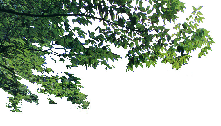 室内 室内装饰素材 园林景观设计 近景树贴图