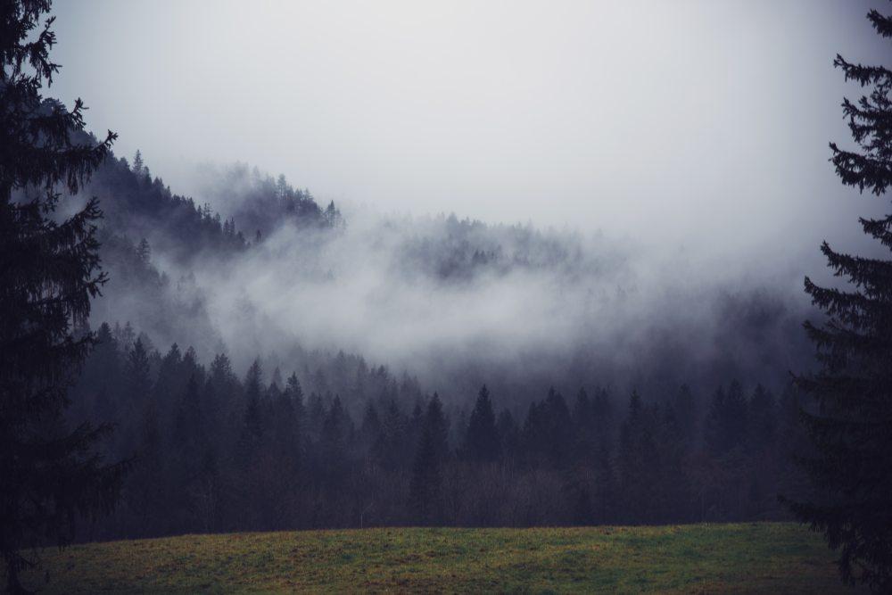 背景 自然圖片 自然風景 迷霧森林攝影圖 高清背景圖片 壁紙  搜索