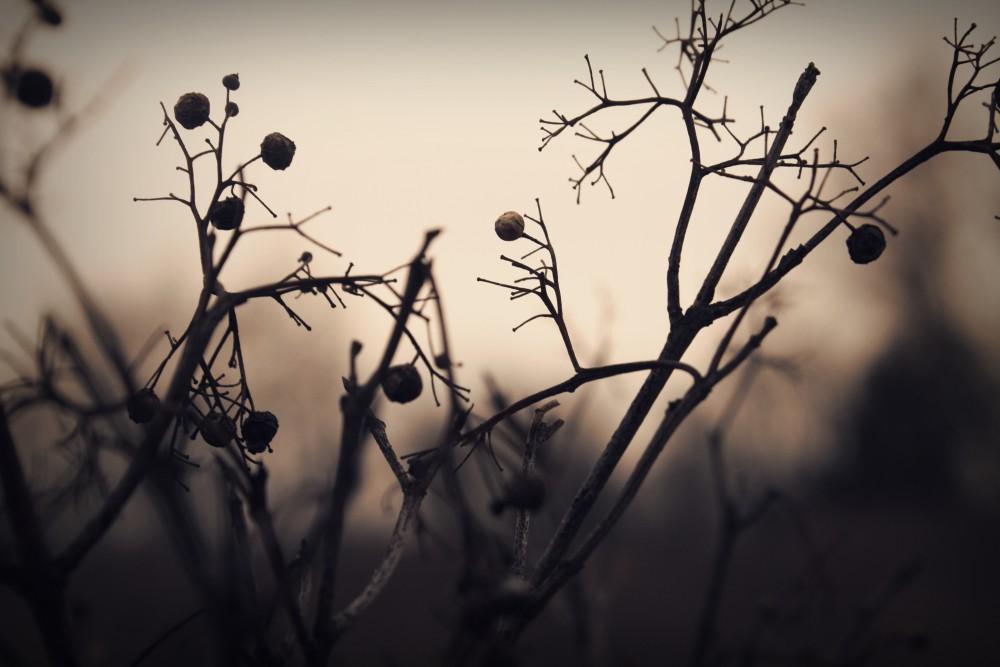 树枝摄影图 高清背景图片 壁纸 大自然