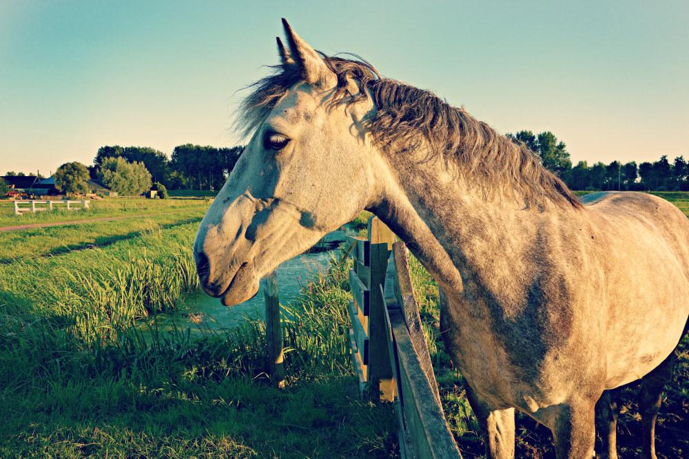 牧场上的马 高清动物背景摄影图 壁纸