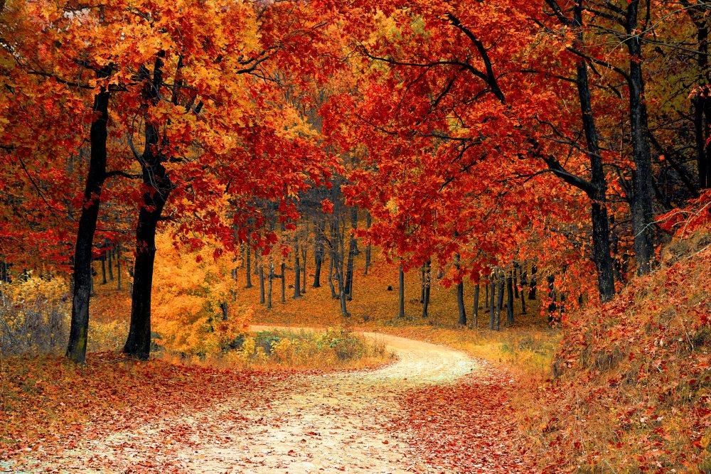 红枫叶小路 高清自然风景背景摄影图 壁纸