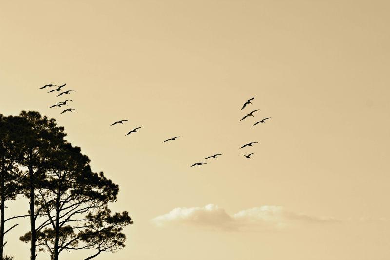 树与飞鸟 高清自然风景背景摄影图 壁纸  风景背景高清背景素材高清背