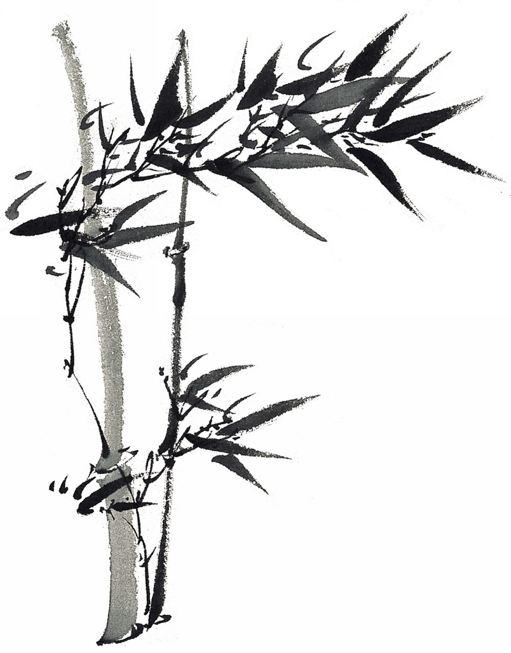 平面/广告 图形图案纹样 图案素材 水墨竹子图片  搜索