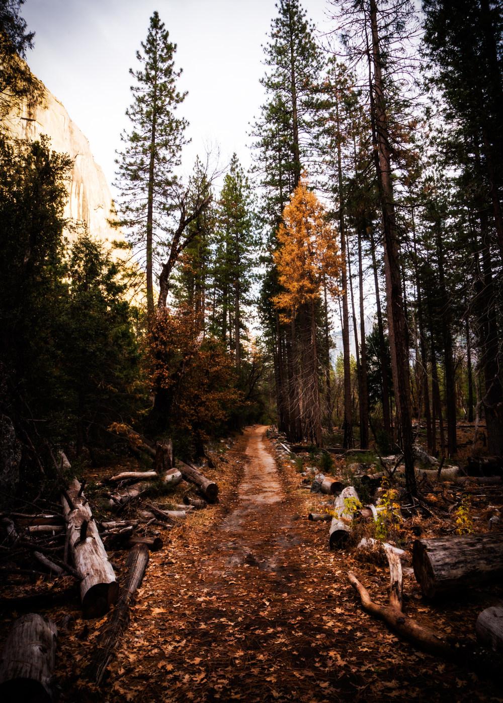 树林小路 高清自然风景背景摄影图 壁纸