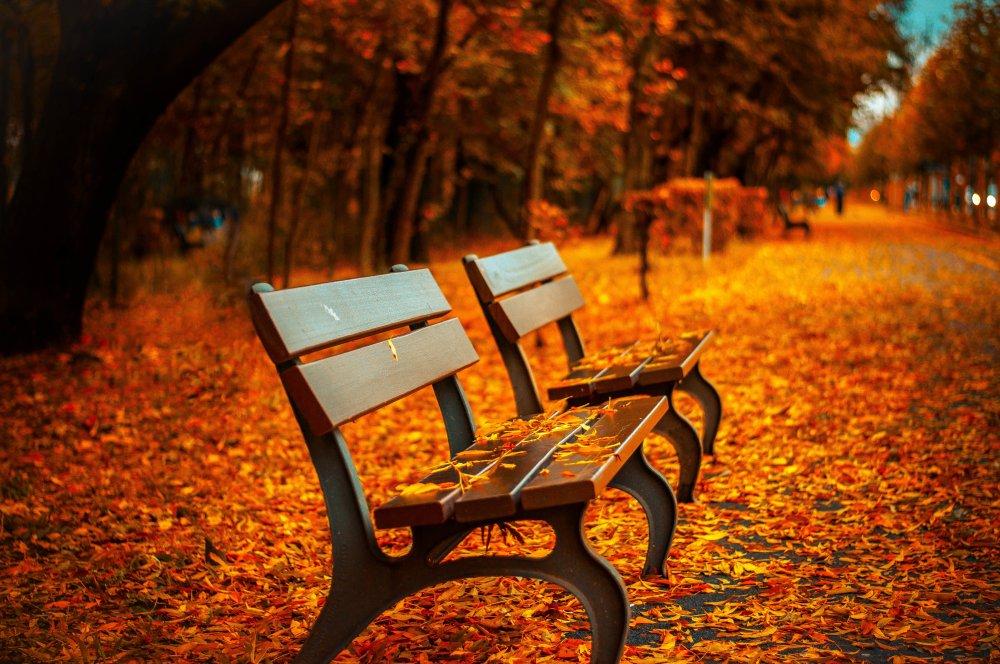 背景素材 自然风景图片 自然风光图片 红叶 椅子 座椅