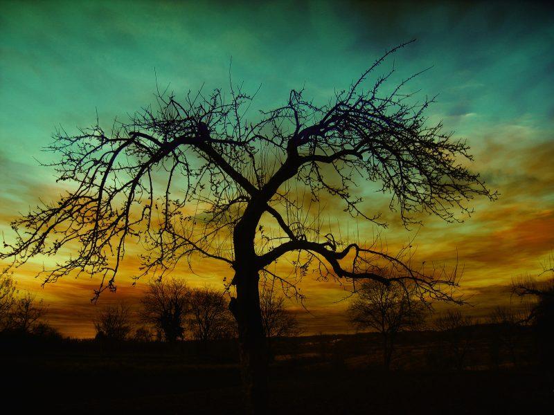 昏暗天空下的枯树林 高清自然风景背景摄影图 壁纸