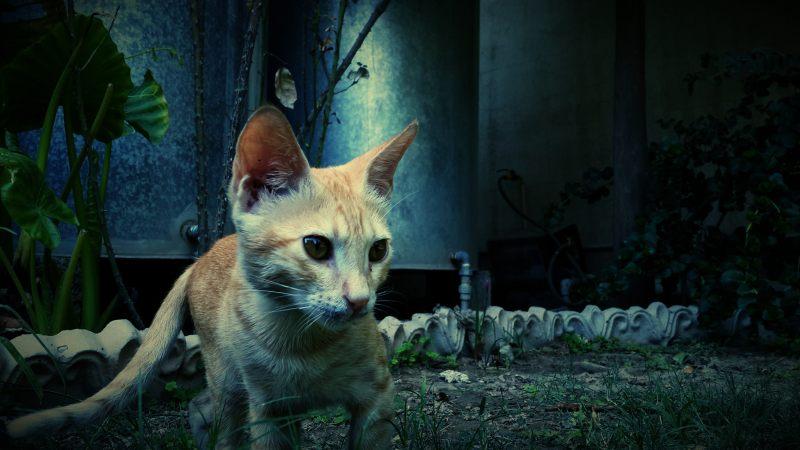乡下家猫 高清动物背景摄影图 壁纸