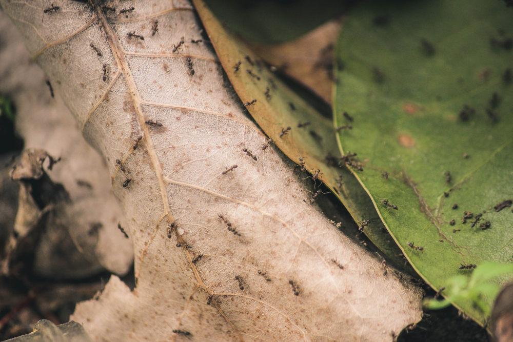 背景上的壁纸眼睛动物树叶v背景图高清4个个人1只蚂蚁1乌龟图片